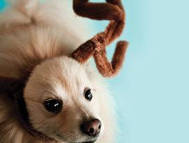The Animal Print Magazine The Modern Culture Pet Magazine For Ri