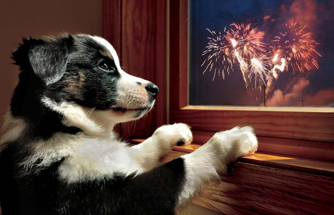 Tips for Surviving Fireworks Season with Your Dog! | The Animal ...